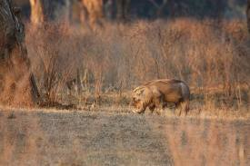 Mana Pools Nat park, cr-tracks4africa.co.za