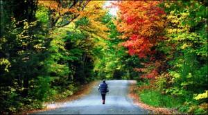 Fall in Boston, Cr-boston.com