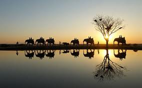 Elephant safari, credit:albatros-africa.com