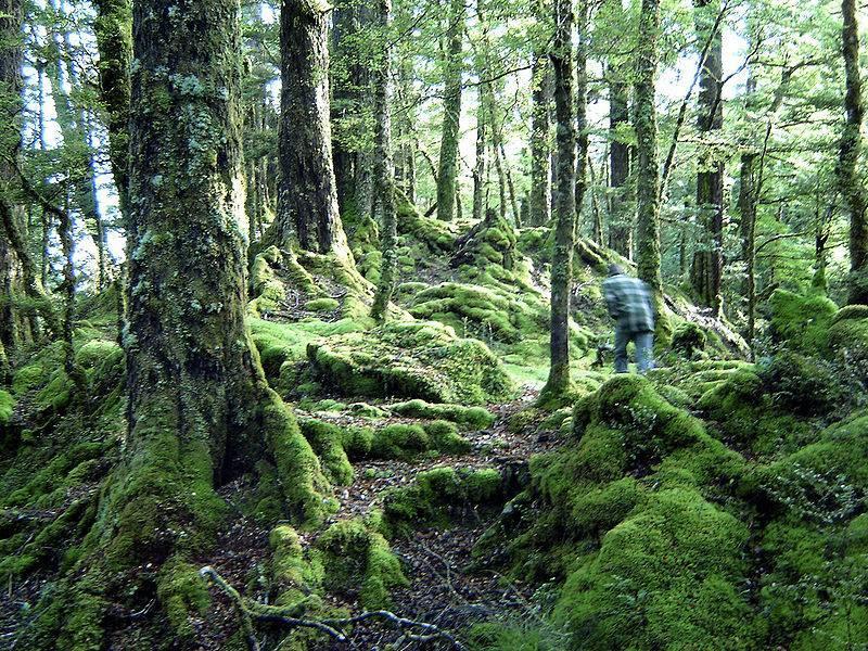 Fiordland National Park, credit smarttravel