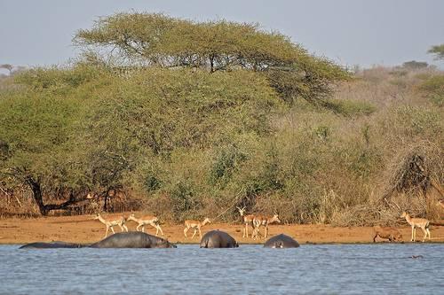 Kruger National Park, Credit  primetravels