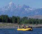 Summer Wildlife in Jackson Hole and Grand Teton National Park