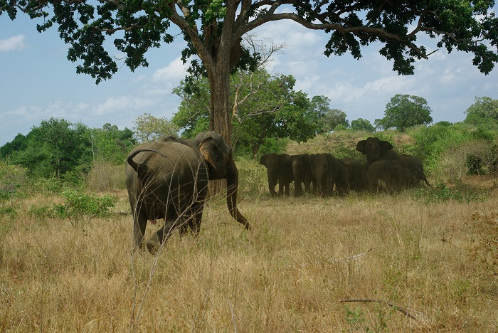 first elephants sight, running away from us