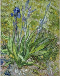 Iris by Van Gogh ... courtesy of National Gallery of Canada