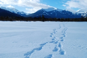 Fresh Tracks Vermillion Lakes - Michelle Barrow