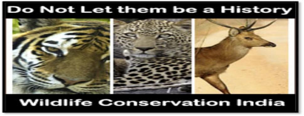 Wildlife-credit: - environment.co.za