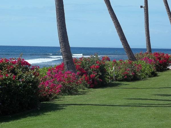 Hawaii 008(1)