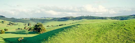 The rolling green hills of Northland appear to be a slice of heaven.