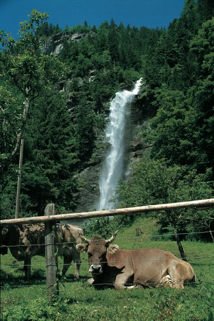Sommer Summer 1$2$6 Wasserfall Kuh Waterfall Cow
