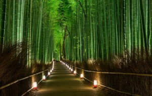 Bamboo Forest, JapanBamboo Forest, Japan