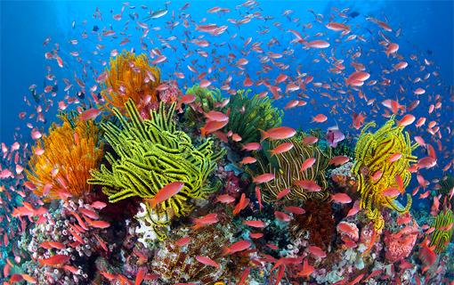 Great Barrier Reef, acfonline.org.au